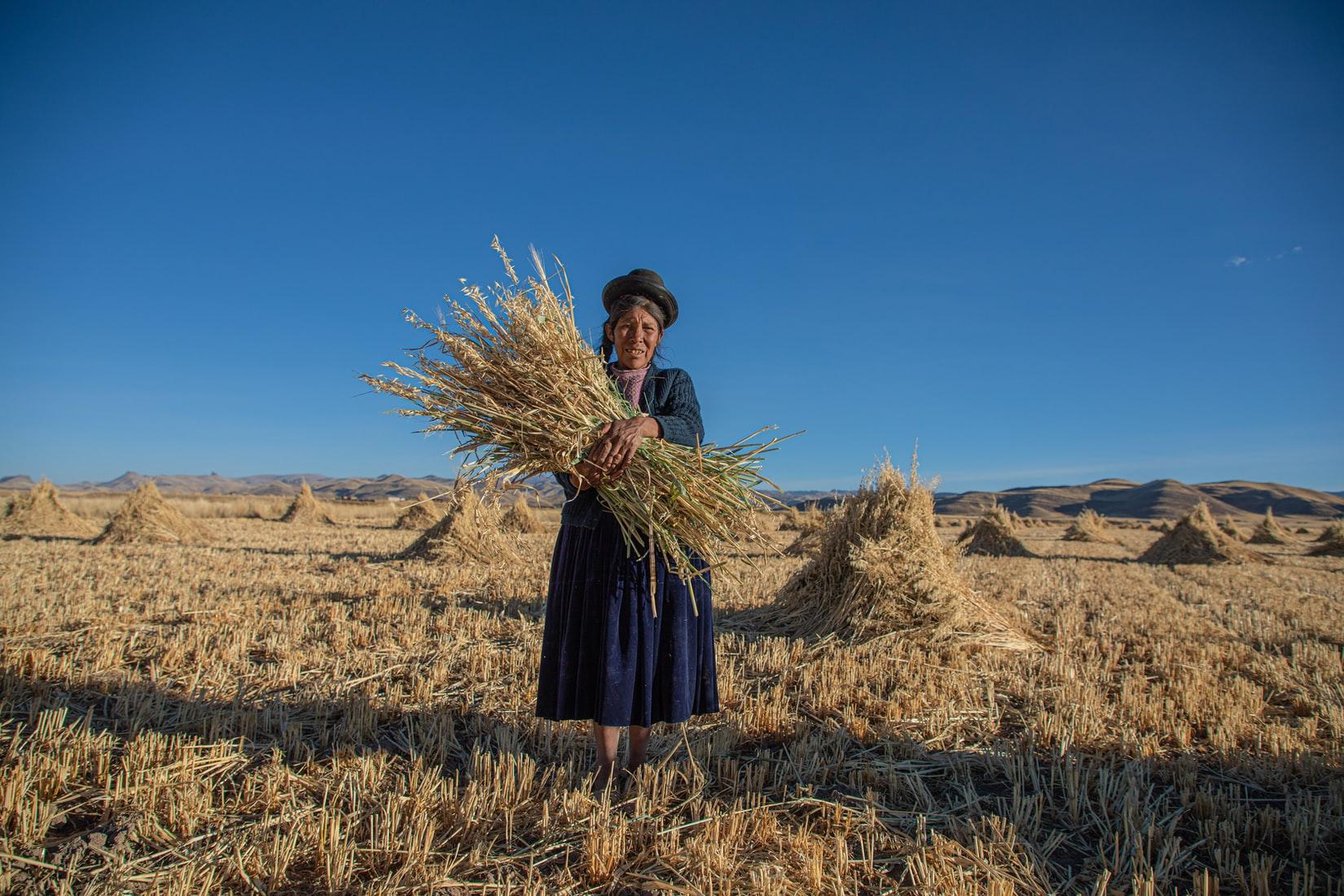 Acción Andina: la riforestazione delle Ande