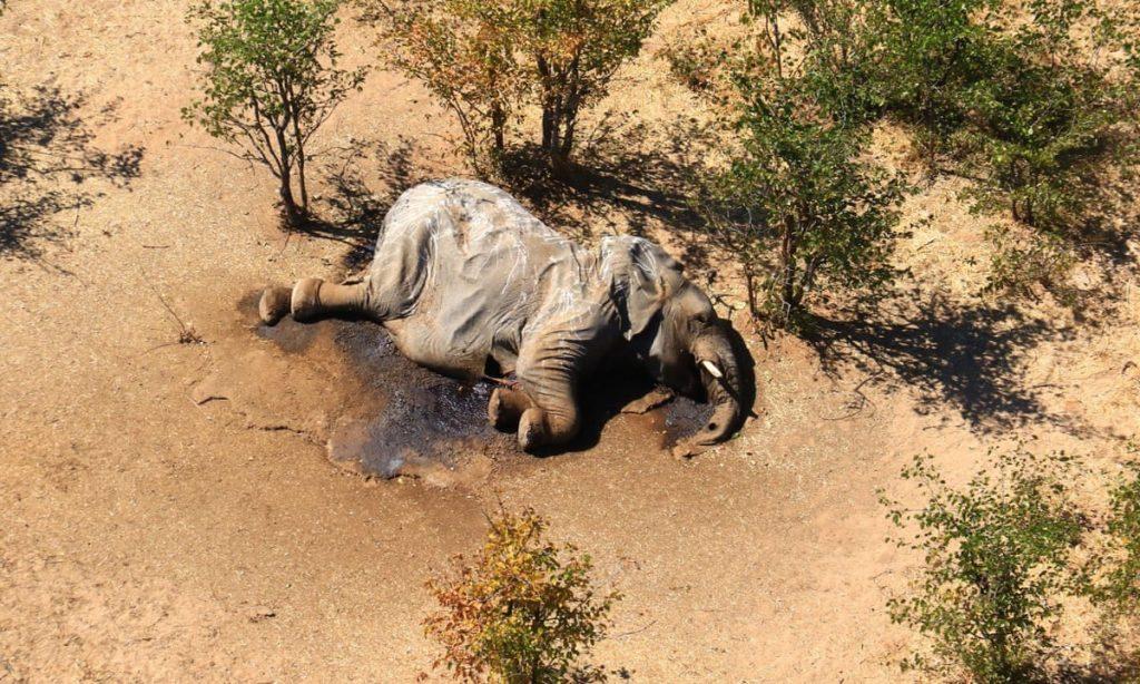il petrolio minaccia la riserva di Okavango